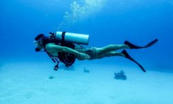 Snorkeling and Scuba Diving in Placencia Belize